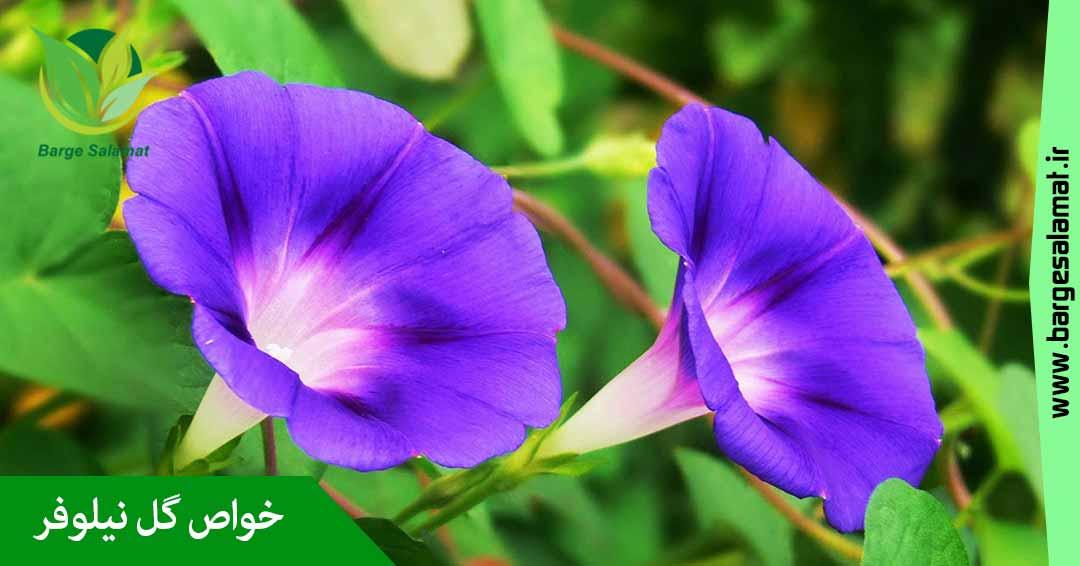 خواص گل نیلوفر