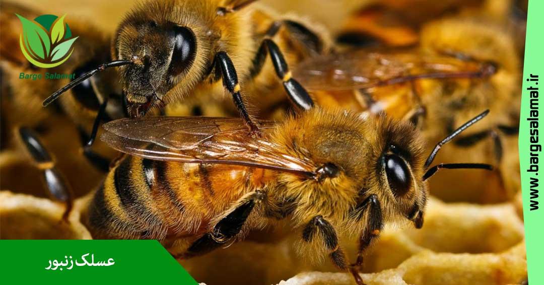 خواص عسلک زنبور
