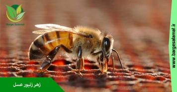 خواص درمانی زهر زنبور عسل